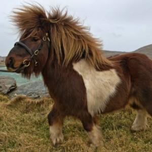 horsesquareali